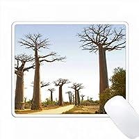 マダガスカル南西部のモロンダバ近くの巨大なバオバブの大通り。 PC Mouse Pad パソコン マウスパッド