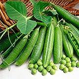 400 Unids/Set Semillas De Flores De Frutas Vegetales 20 Tipos Jardín Patio Granja DIY Planta Decoración Semillas de flores de frutas vegetales