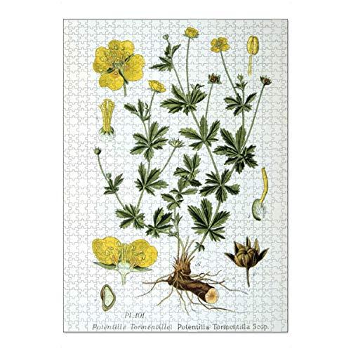 artboxONE Ravensburger-Puzzle XL (1000 Teile) Natur Blutwurz - Puzzle Natural blutwurz Botany