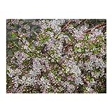 Blooming Apple Orchard Alatau Mountains - 500 rompecabezas para adultos y niños de 12 años en adelante, varios
