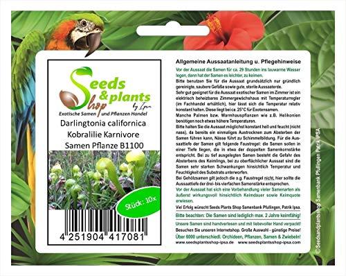 Stk - 10x Darlingtonia californica Kobralilie Karnivore Samen Pflanze B1100 - Seeds Plants Shop Samenbank Pfullingen Patrik Ipsa