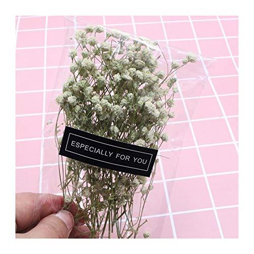 Linyuex Getrocknete Blumen-Mini Garten Micro Landschaft Zubehör Natur Getrocknete Blumen Getrocknete Garten Innendekoration-Wand-DIY Blume Material (Color : White)