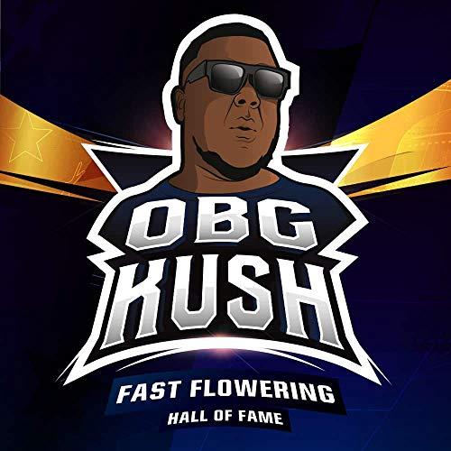 OBG Kush (2)