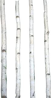 Four Thin White Birch Poles 6 ft