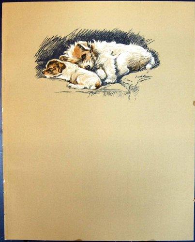 Perrito de Jack Russell del Remiendo de los Perros de la Impresión de Color de la Antigüedad de Lucy Dawson 1936