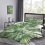 Juego de 3 colchas de colcha, bosque tropical lluvioso, árboles de bambú altos en arboleda, estilo exótico, naturaleza, tema zen, con estampado de imágenes, juego de cama, muy suave y verde suave