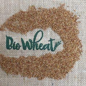 Semilla de Trebol rojo ecológica para germinar (100g)