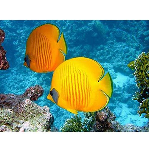 Diopn 5D Diamant Schilderen DIY Gallon Fish Diamant Borduurwerk Vis Schilderen Strass Steentjes Cross Naaldwerk Aquarium(Rond Diamant 30 * 40) 30 * 40