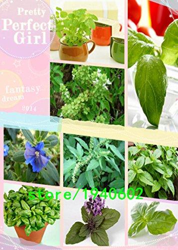 Grand basilic feuilles, plantes bonsaï de jardin Fleur de basilic Graines, about100particles de semences de l'emballage d'origine