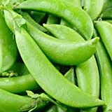 Peas, Sugar Snap Pea Seed, Organic, NON- GMO, 20 seeds per package,◾Green peas are one of the most nutritious leguminous vegetables, rich in health benefiting phyto-nutrients, minerals, vitamins and anti-oxidants.