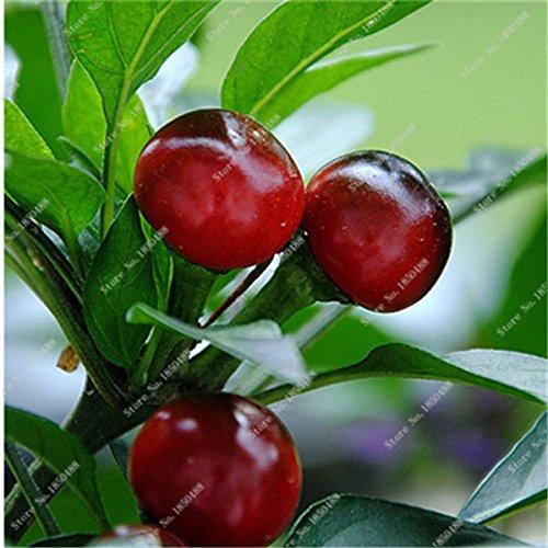 Cerise poivre Graines de légumes jardin Bonsai Chili usine alimentaire non Ogm Jardin Décoration Cuisine Assaisonnement 200 Pcs 6
