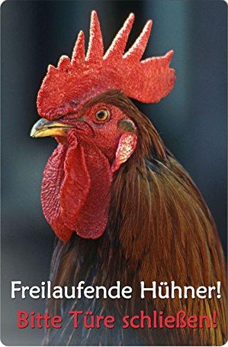 +++ HAHN Huhn Hühner - METALL WARNSCHILD SCHILD TÜRSCHILD SIGN - UHN 04