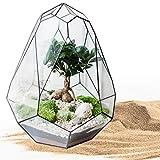 Farb-Sand 1000g, Creme ✓ Deko-Sand für Vielseitige Bastelideen ✓ Tolle Tischdeko/Tischdekoration ✓ Zum Befüllen von Glasgefäßen Vasen Teelichthalter ✓ bunter Sand | trendmarkt24-9102102 - 6