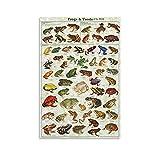 WIUWINF World Scientific Poster mit Frosch und Kröte, auf