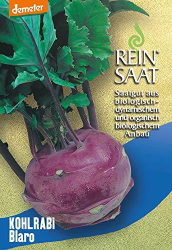 Reinsaat Ko21 Kohlrabi Blaro (Bio-Kohlsamen)