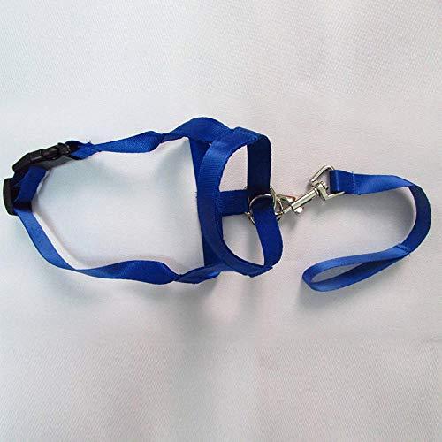 Correa ajustable para perro sin tirar, correas para mordedura, arnés para el cuello, bozal y correa para perro, cuello clásico, color azul