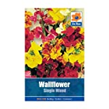 Wallflower Single Mixed Seeds