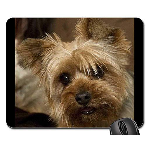 Alfombrillas de ratón - Yorkie Terrier Dog Cap Canine Yorkshire Terrier