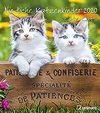 Niedliche Katzenkinder 2020 - Wandkalender - 30x34cm - Tierkalender - Fotokalender - Katzenkalender