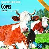 2020 Kühe Kalender 16 Monate 12 x 12 Wandkalender von Bright Day Kalendern (Kalender für einen Grund Wandkalender) 12 inch x 24 inch Kühe 2020