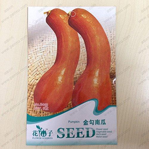 Facile à cultiver 100pcs / sac Coriandre, Graines Rich Aroma, Bonne cuisine Herb Bricolage Jardin Semences potagères bon goût délicieux sain