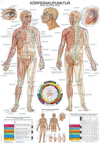 """Lehrtafel\""""Körperakupunktur\"""", 70x100cm"""