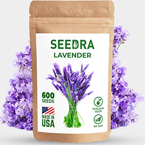 SEEDRA English Lavender Seeds for Indoor and Outdoor Planting - 600 seeds/500mg - GMO-Free and Heirloom Seeds - Germination Above 90% - 1 Pack