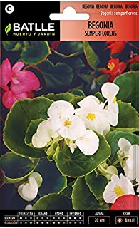 Amazon.es: 4 estrellas y más - Semillas / Plantas, semillas y ...