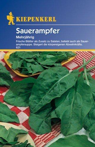 Sperli Gemüsesamen Sauerampfer mehrjährig, grün