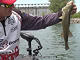 Shallow-water Smallmouth Bass, Niagara River, ON - Csf 31 11
