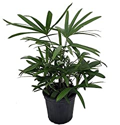 Best Feng Shui Plants For Your Home