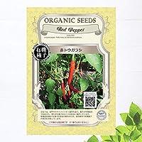 【有機種子】 赤トウガラシ Sサイズ 0.1g 種蒔時期 3~5月