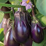 Early-yielding all-American selections winner, perfect for patios and Small gardens Each packet contains 30 seeds Sow indoors 8 weeks before average last frost date using a Burpee seed starting kit. Transplant to the garden 4 weeks after the average ...