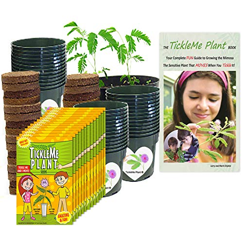 TickleMe Plant Classroom or Homeschool Science Fun Planting Party kit - for 30 Students - Grow The House Plant That Closes Its Leaves When You Tickle It. Includes Activity Book