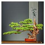 Bonsai Artificial Artificial acogedor pino Bonsai Zen, como fake plantas verdes, adornos, estilo chino, estilo, árbol, en maceta, tienda, tienda, decoración de la tienda plantas falsas ( Size : B )