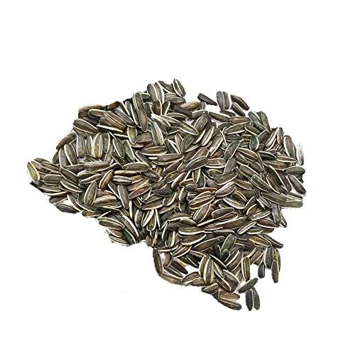 Lyra Pet® 25 kg XXL Sonnenblumenkerne gestreift Wildvogelfutter Wildvögel Vögel Körner Streufutter