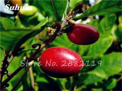 Miraculine fruits tropicaux Graines rares Graines Plantes de Cajou Jardin potager Bonsai Pot Fleurs 20 Pcs 10