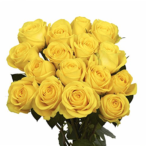 GlobalRose 50 Yellow Roses- Fresh Cut Flowers- Vibrant Color Blooms
