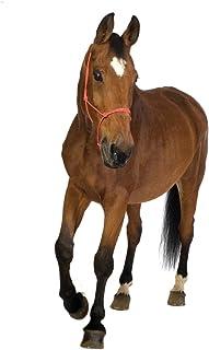JP لندن pmur0006قش ّ ر ْ والصق ْ قابلة للإزالة ملصق حائط من الفينيل ملصق جداري ، حصان بري Gallop ، مقاس 4X 3-feet