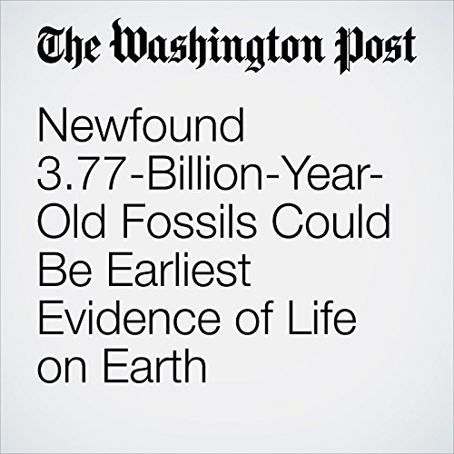 Newfound 3.77-Billion-Year-Old Fossils Could Be Earliest Evidence of Life on Earth copertina