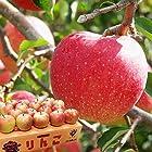 りんご 朝日町のりんご 王林 特秀品 約5kg 約16~20玉 JAさがえ西村山 山形県 産地直送 (出荷予定時期:11月1日~11月15日)