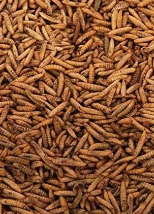 Maltbys' Stores 1904 Limited 1kg DRIED CALCIWORMS CALCI WORMS WILD BIRD...