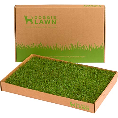Real Grass Dog Potty (Disposable) - Standard 16in