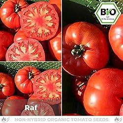 Pepperworld Raf Bio Fleisch-Tomate, 10 Korn, Tomaten-Saatgut zum Anpflanzen, karmesin-rot und herzförmig