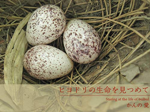 Staring at the life of a bulbul: A 19-day miracle with a bulbul (Bulbul publication) (Japanese Edition)