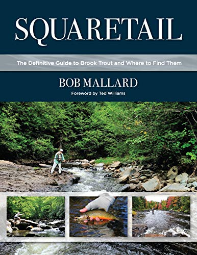 Squaretail: The Definitive Guide to Brook Trout and Where to Find Them