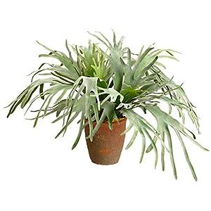 "Silk Flower Arrangements SilksAreForever 33.5"" Artificial Staghorn Fern Plant w/Clay Pot -Green/Gray (Pack of 2)"