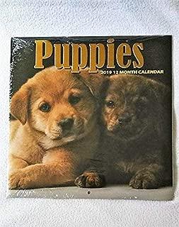 2019 Puppies 12-Month Calendar Wall Calendar 12