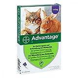 Bayer Vital GmbH Advantage 80 mg für gr.Ka 4X0.8 ml