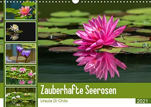 Zauberhafte Seerosen (Wandkalender 2021 DIN A3 quer)